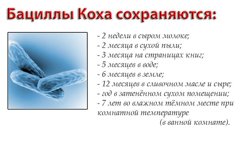 Устойчивость микроорганизма в помещении