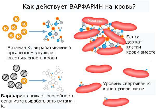 Механизм действия Варфарина