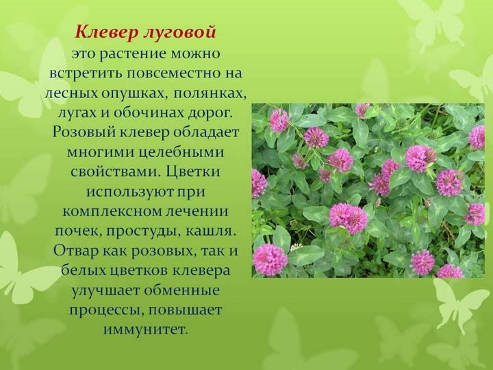 Трава лечебная