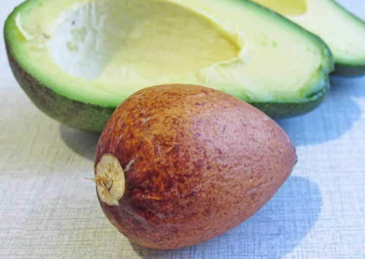 Косточка плода