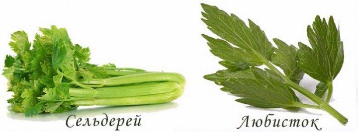 Виды зеленушки