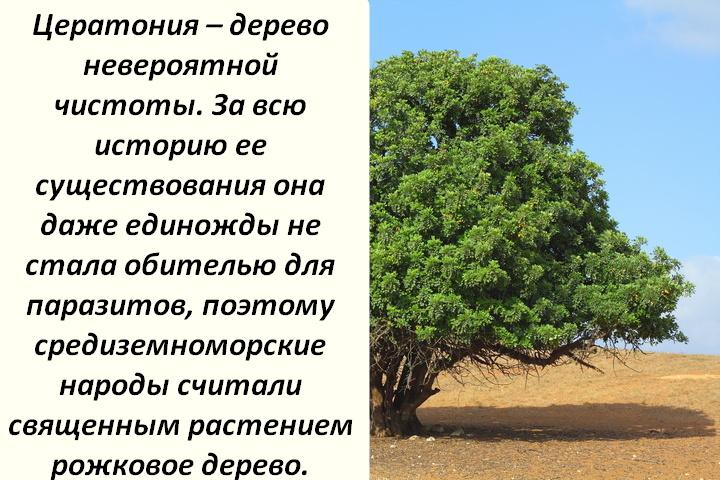Чистое дерево