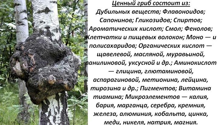Талица Менделеева в грибе