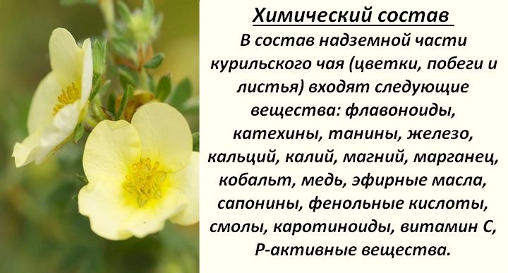 Полезные вещества в цветках