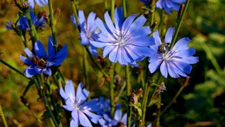 Цветы синего цвета
