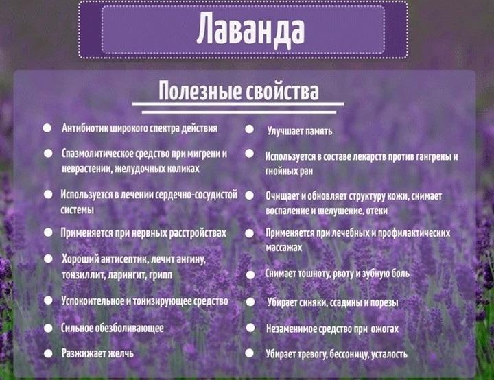 Польза травы