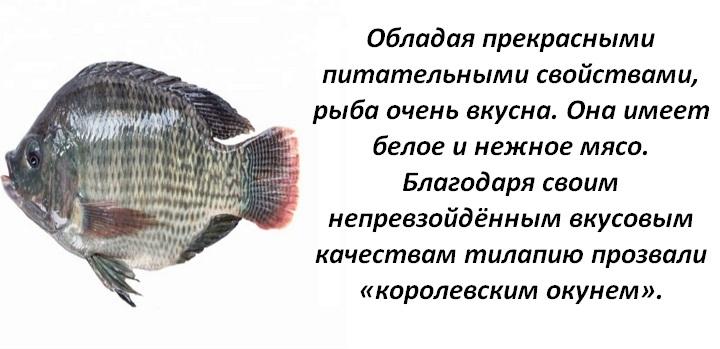 Рыба королей