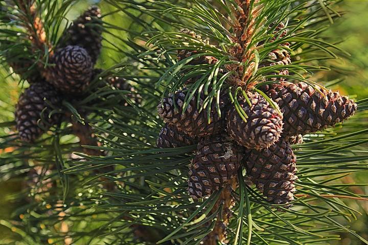 Гроздь на дереве колючем