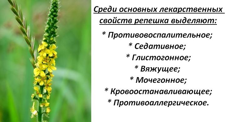 Польза от травы