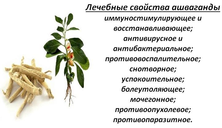 Растение доктор
