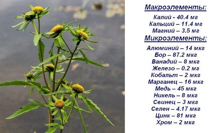 Состав травы