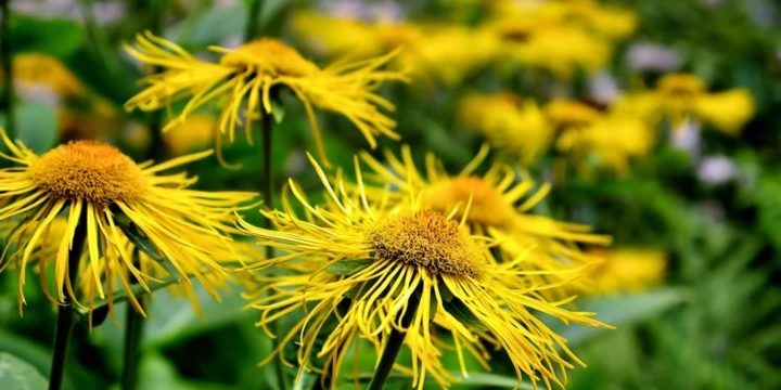 Букет желтой травы