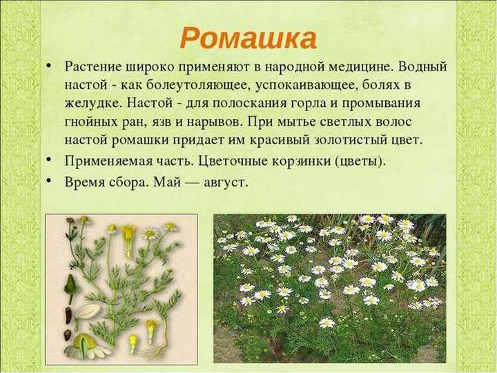 Информация о траве