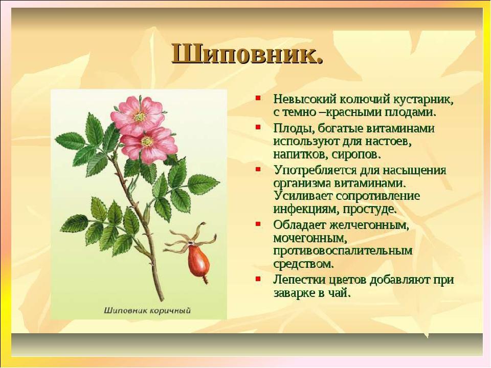 Полезные ягоды