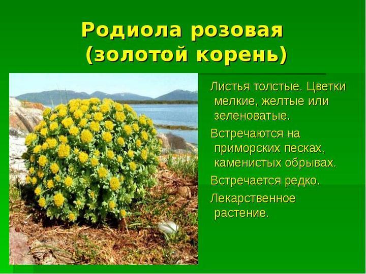 О растении
