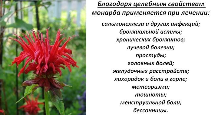 Целительные растения