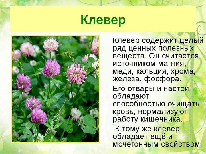 Фармакология растения