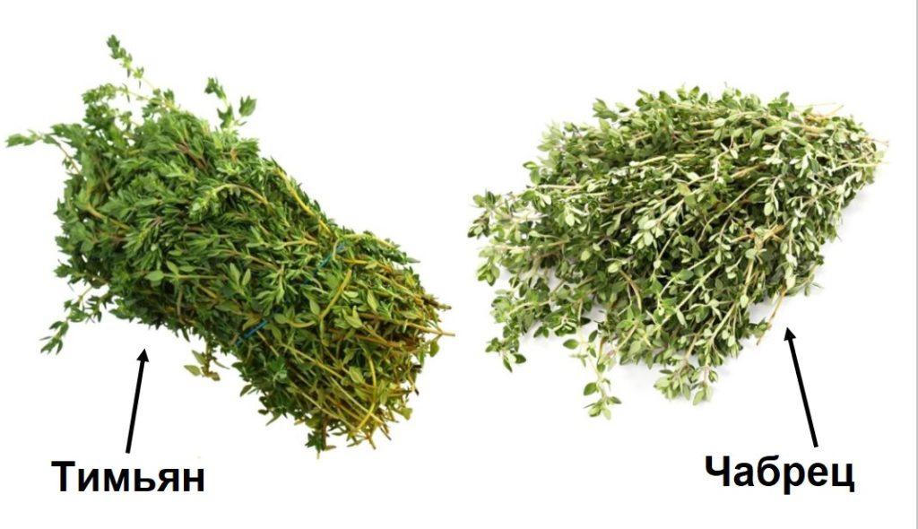 Разновидности растения