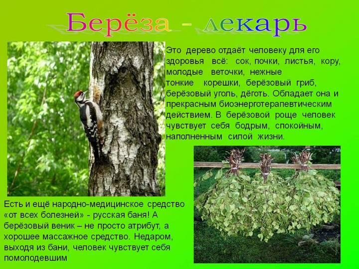 Доктор дерево