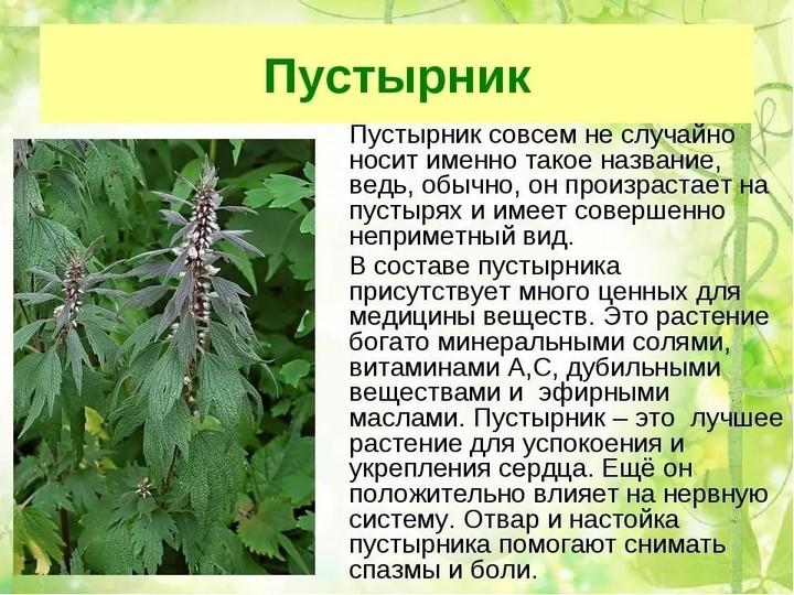 Факты о траве