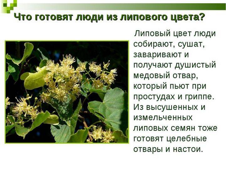 Применение растения