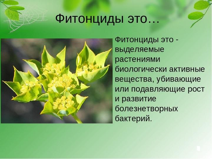 Помощники растения