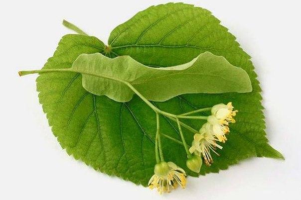 Соцветие на листе