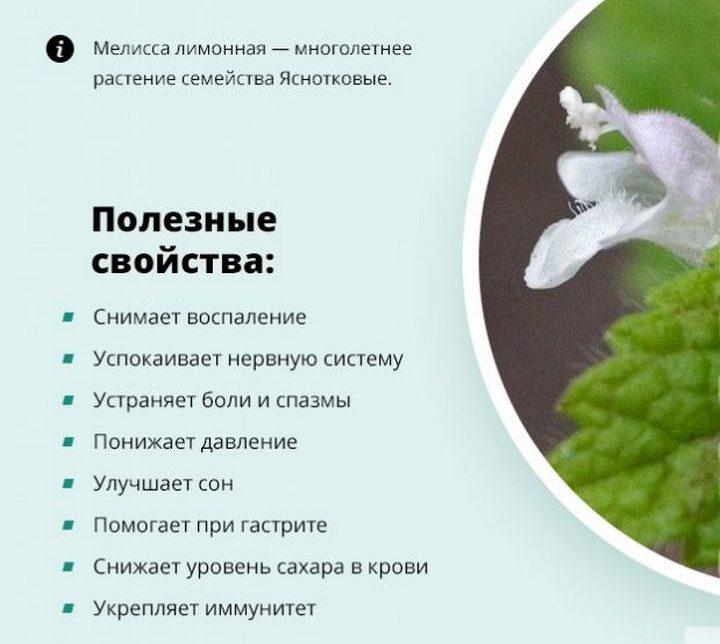 Польза от травы для здоровья
