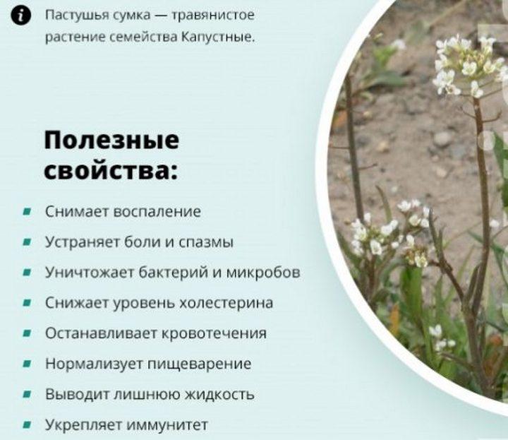 Польза от растения