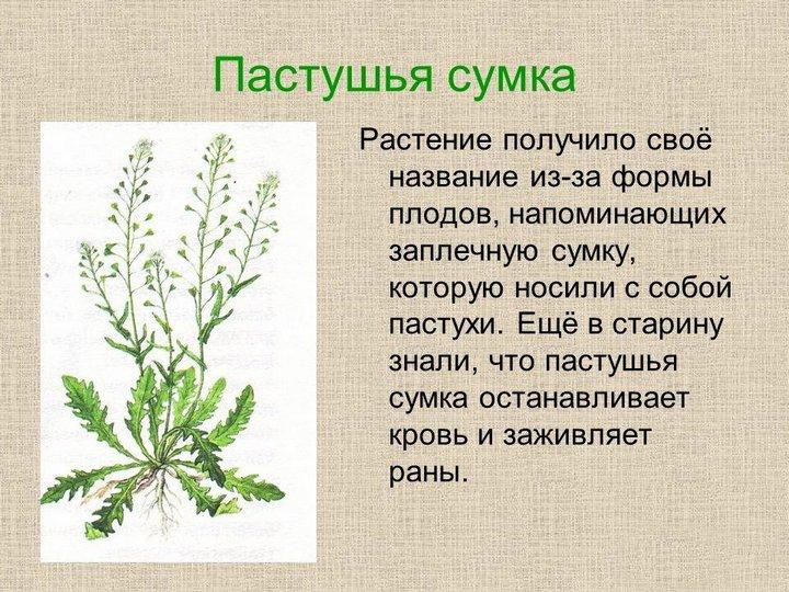 Факты о растении