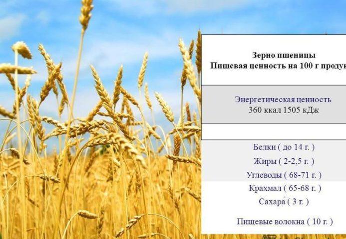Элементы в пшенице