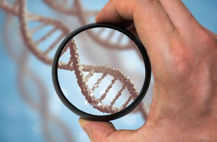 ДНК под лупой